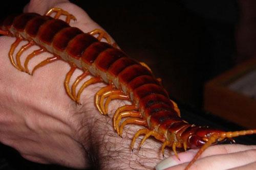 Chân dung top động vật ngoại cỡ khiến ai cũng hết hồn - Hình 1