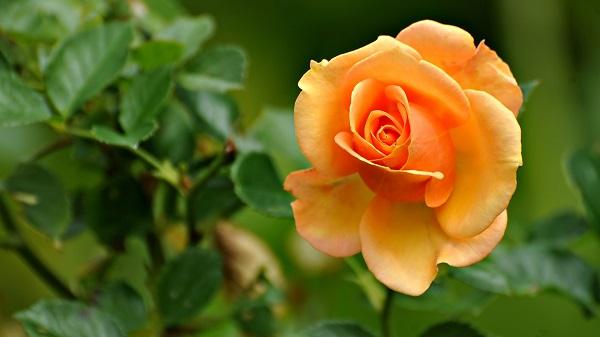 Thứ Năm của bạn (13/02): Nhân Mã thuận lợi trong tình cảm, Bảo Bình nên mở lòng hơn - Hình 1