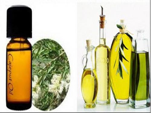 Tinh dầu tràm chống cúm, ngừa viêm nhiễm - Hình 1