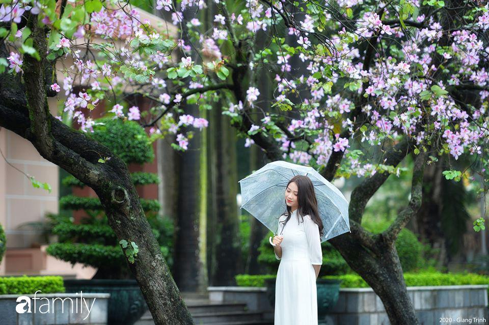 Chùm ảnh: Những ngày ảm đạm vì dịch bệnh và mưa rét, chẳng ai nhận ra hoa ban tím ở Hà Nội đã lặng lẽ bung nở từ khi nào - Hình 1
