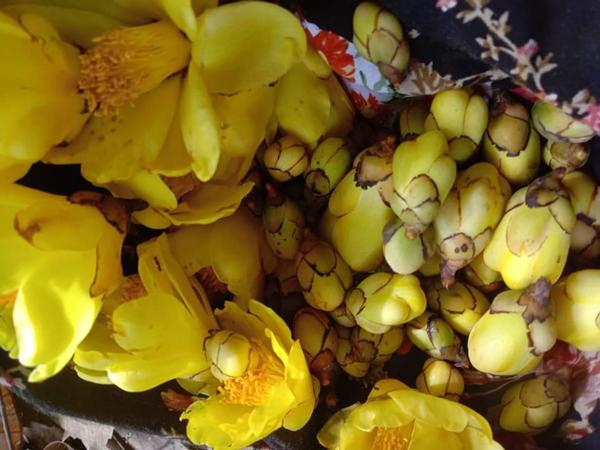 Loại trà được người giàu Việt săn lùng, có nơi bán giá 30 triệu đồng/kg - Hình 1