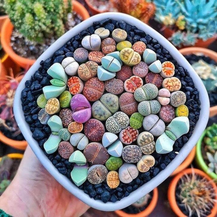 15 loài thực vật khiến căn nhà của bạn thêm sống động - Hình 1