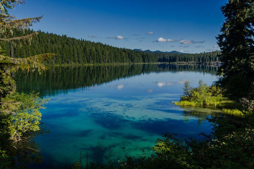 Khám phá hồ nước ẩn chứa cả khu rừng cổ xưa - Hình 1