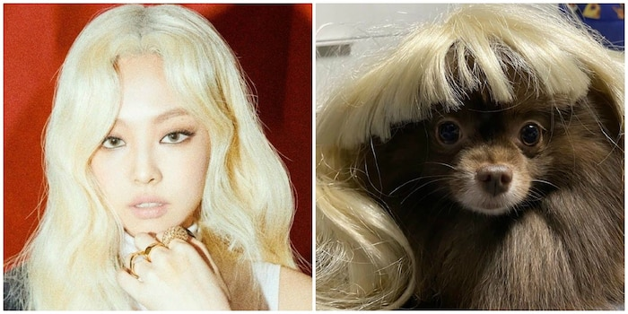 Xem loạt ảnh chị em song sinh dễ thương muốn xỉu của Jennie (BlackPink) và cún cưng - Hình 1