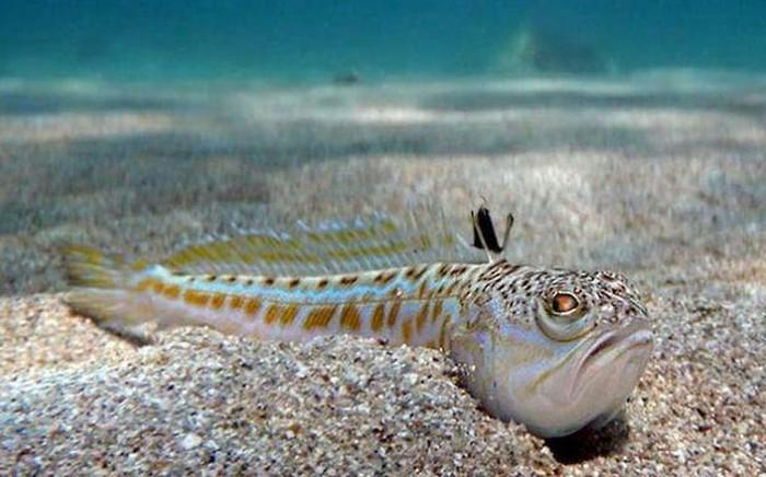 Tin 'sốc': Cậu bé 16 tuổi chết ngay lập tức chỉ vì chạm vào con cá kỳ lạ khi đang lặn biển Tin-soc-cau-be-16-tuoi-chet-ngay-lap-tuc-chi-vi-cham-vao-con-ca-ky-la-khi-dang-lan-bien-bae-5179652
