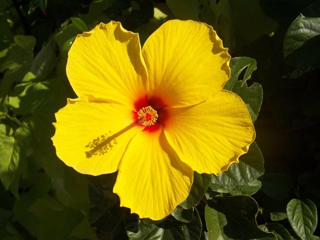 7 loài hoa giúp làm đẹp da - Hình 2
