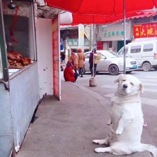 Chó cưng ngồi trước cửa hàng xin ăn - Hình 4