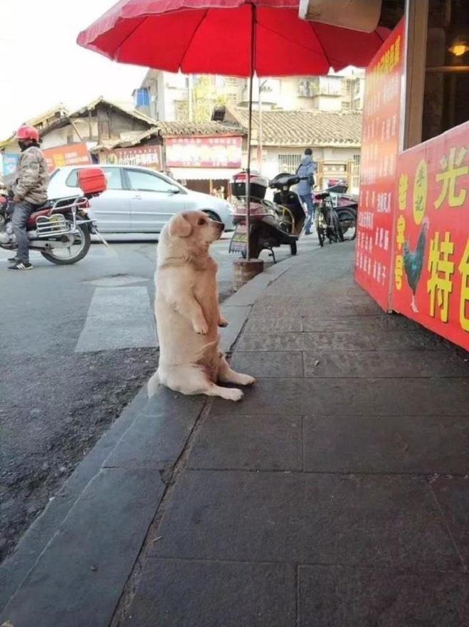 Chó cưng ngồi trước cửa hàng xin ăn - Hình 2