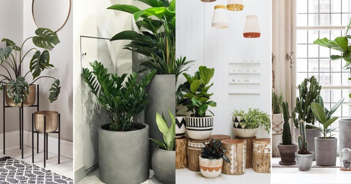 Ý tưởng bố trí cây xanh giúp ngôi nhà phong cách hơn